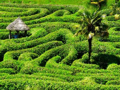 Maze Labyrinth Glendurgan Garden Cornwall
