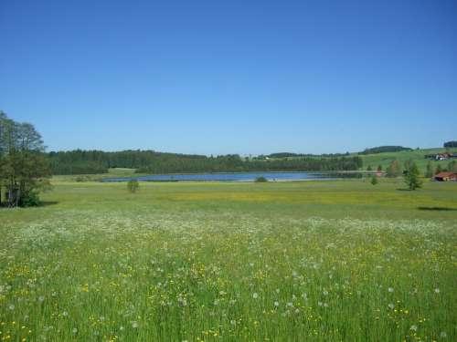 Meadow Flowers Bloom Grass Green Attlesee Allgäu