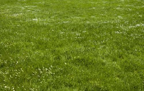 Meadow Rush Space Plant Grass Texture Environment