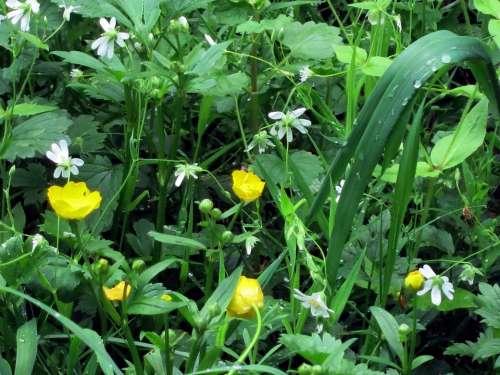 Meadow Green Grass