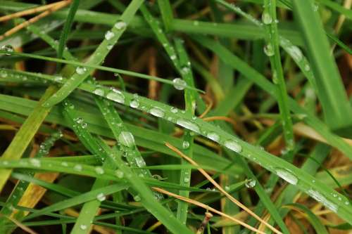 Meadow Grass Blade Of Grass Drip Rain Dew Green