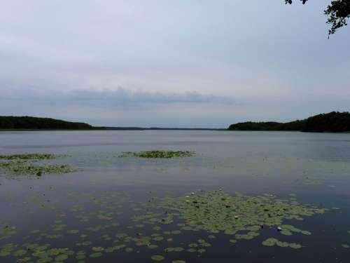 Mecklenburg Mecklenburgische Seenplatte Nature Lake