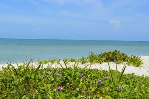 Mexico Yucatan Celestun Beach Paradise Sea Sunny