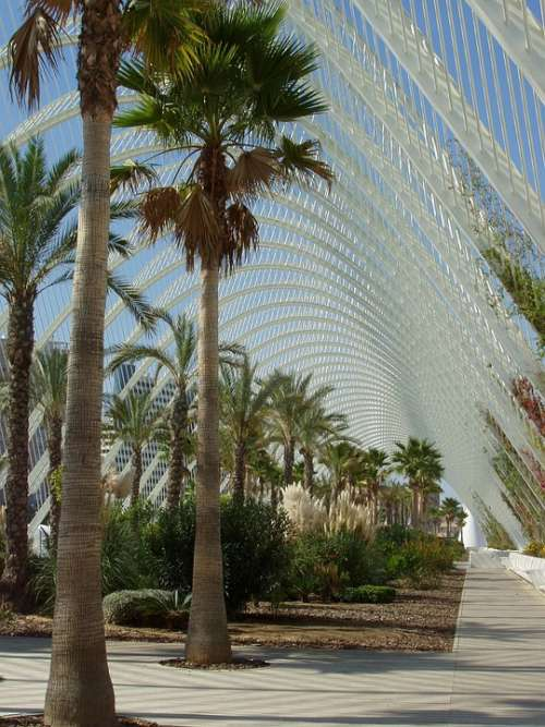 Mexico Palms Palm Trees Structure Canopy Steel