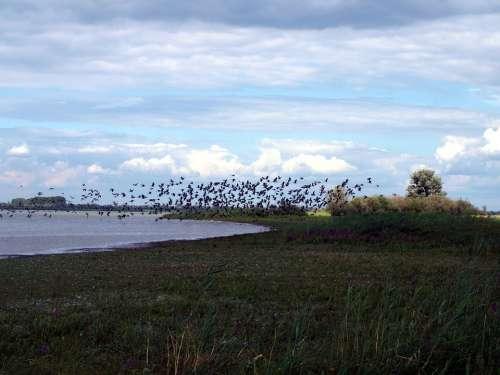 Migratory Birds Flock Of Birds Lake Water Birds