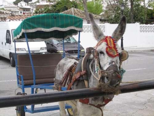Mijas Spain Andalusia Taxi Donkey