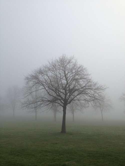 Mist Fog Tree Landscape Nature Forest Light