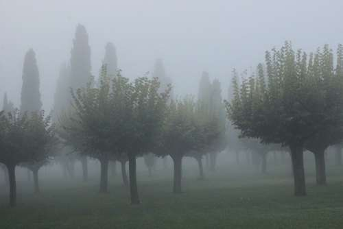 Mist Cypress Atmosphere Background