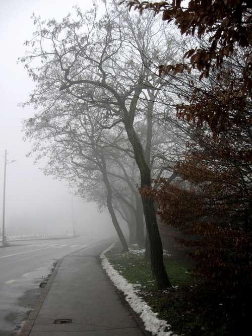 Misty Road Tree Winter Fog Cold Gloomy