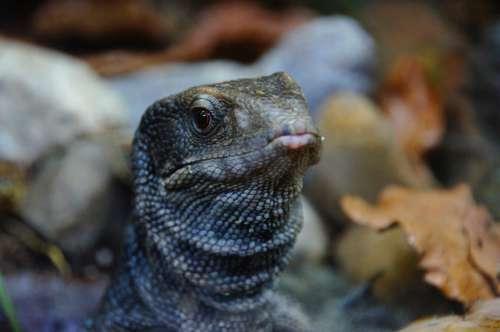 Monitor Reptile Zoo Dragon Lizard