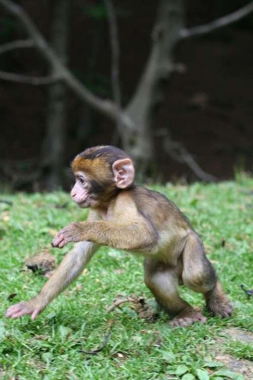 Monkey Baby Nature Forest Enclosure Äffchen