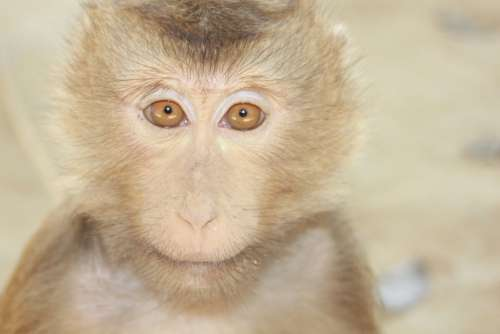 Monkey Eyes Curious Playful Abroad Trip Jailed