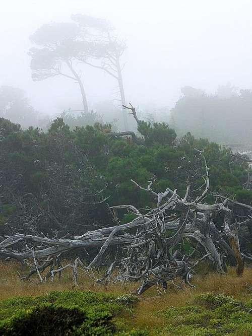 Monterey Mist Fog Landscapes Nature