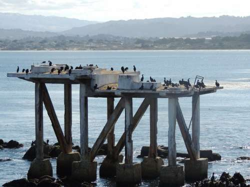 Monterey Bay California Beach Birds Rocks Pier