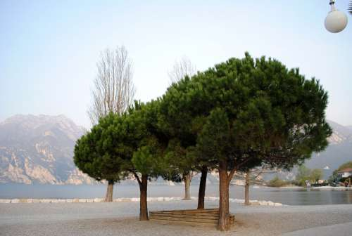 Mood Garda Trees Bank Lago Di Garda Italy Beach