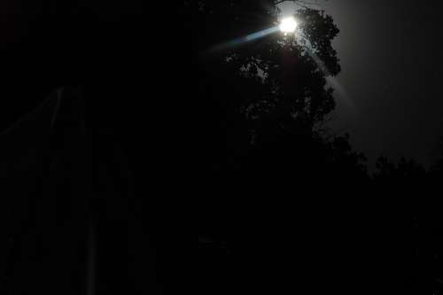 Moon Moonlight Moon By Trees