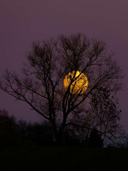 Moon Full Moon Moonrise Evening Twilight Moonlight