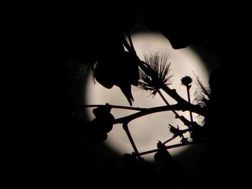 Moon Full Moon Night Night Sky Silhouette Spooky