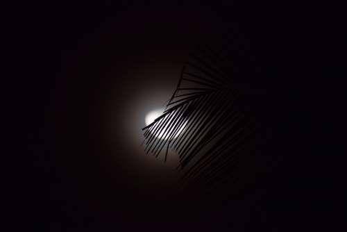 Moon Night Moonlight Nature Dark Trees