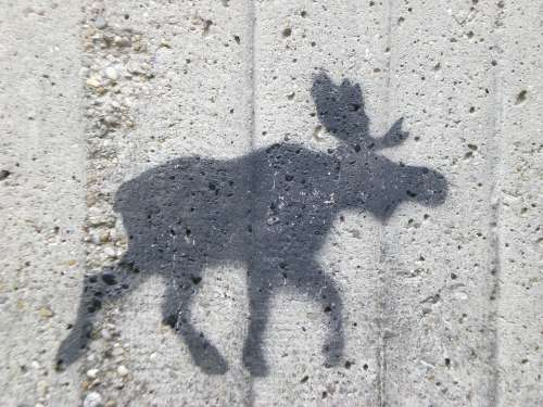 Moose Wall Figure