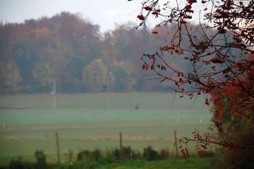 Morgenstimmung Shrubs Sunrise Fog Bank Fog Skies