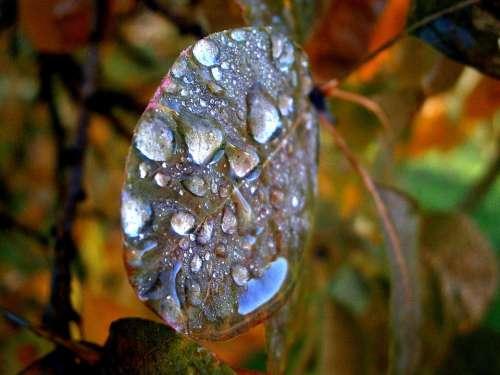 Morgentau Dew Dewdrop Water Morning Colorful