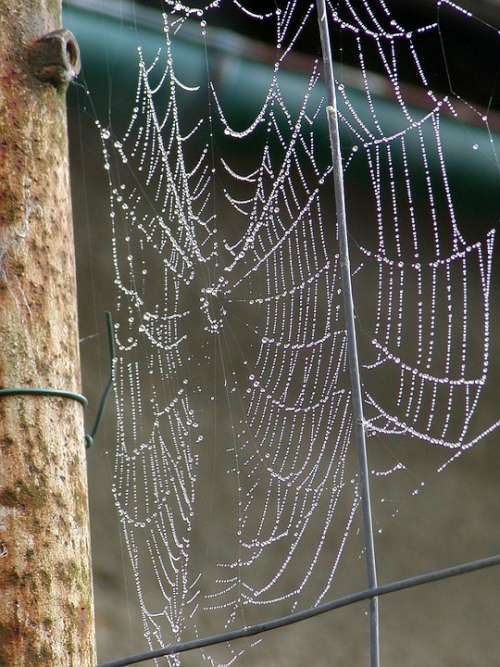 Morning Web Dew Composition Woven Spider Lace