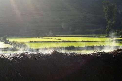 Morning Smokey Thatch Lightbeam Rice Field