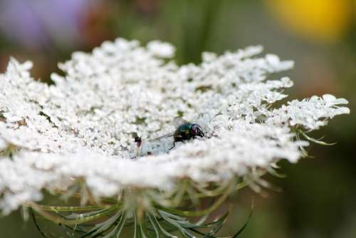 Moscow Insect Flower Nature Green Landscape Fauna