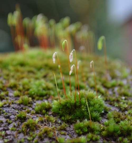 Moss Lichen Green Forest