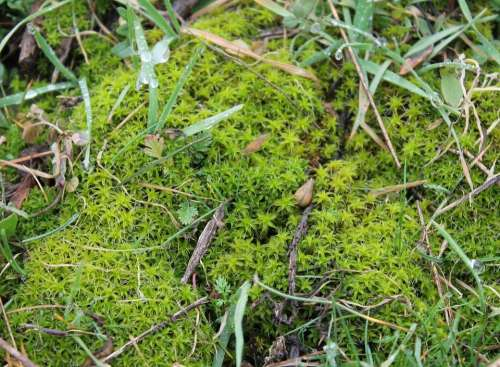 Moss Green Nature Plant