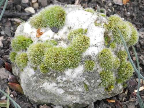 Moss Stone Green Weave