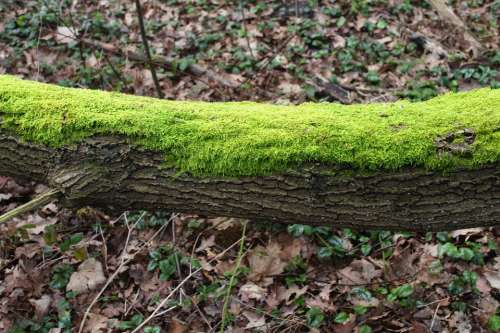 Moss Tree Green Forest Nature