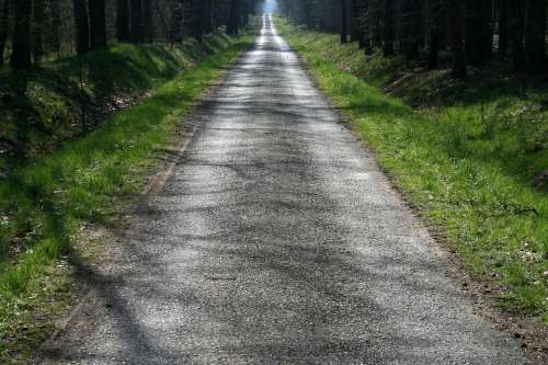 Moss Path Landscape