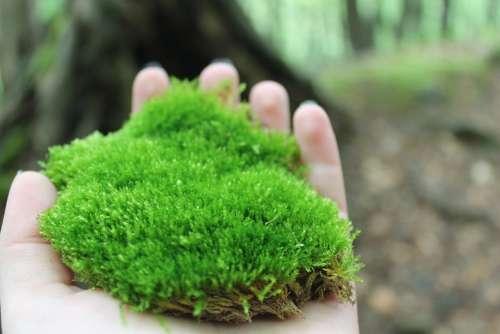 Moss Nature Plant Summer Flora Green Hand