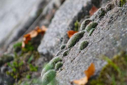 Moss Skalka Green Nature Plant Stones