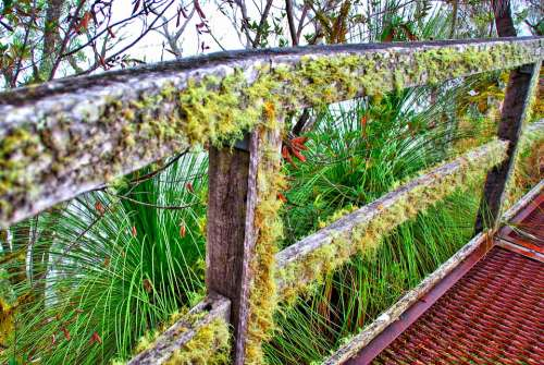 Moss Lichen Fence Wooden Old Surface Rough