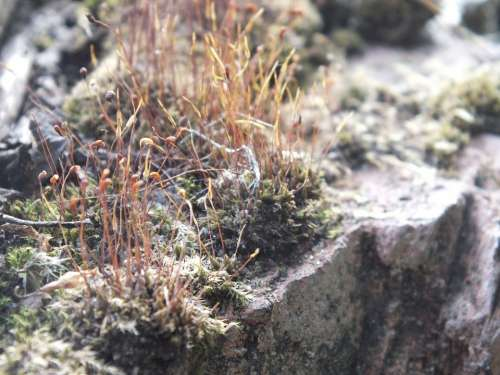 Mosses Stone Grey Lichens
