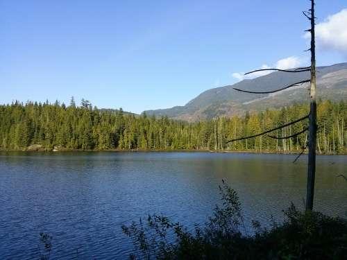 Mountain Lake Tree Landscape Summer Outdoor