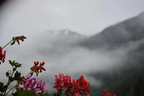 Mountains Flower Mountain Cloud
