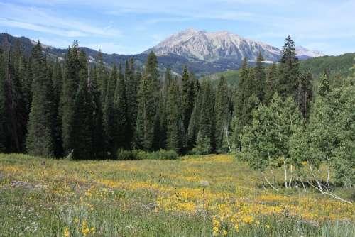 Mountains Forest Colorado Landscape