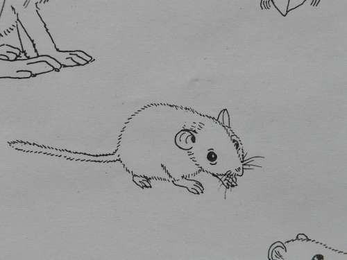 Mouse Animal Coloring Pages Paint Draw