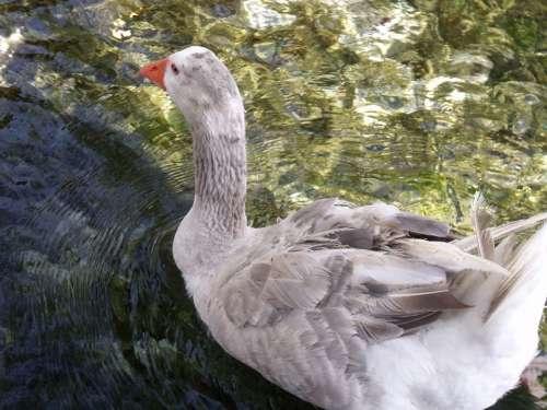 Mugla Akyaka Travel Nature Water