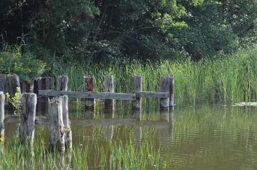 Müritz Water Waters Lake Nature Idyllic Wood Web