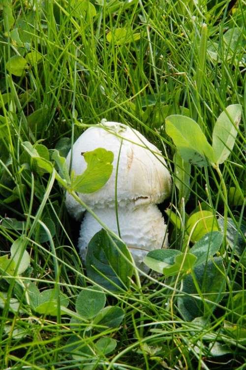 Mushroom Hidden In The Grass Grass Meadow