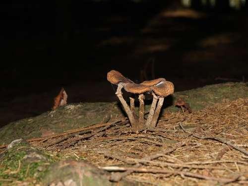 Mushroom Nature Forest Leaves Autumn Mood