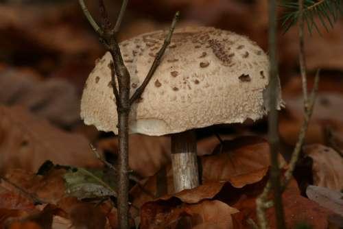 Mushroom White Mushroom Giant Mushroom Forest Fruit