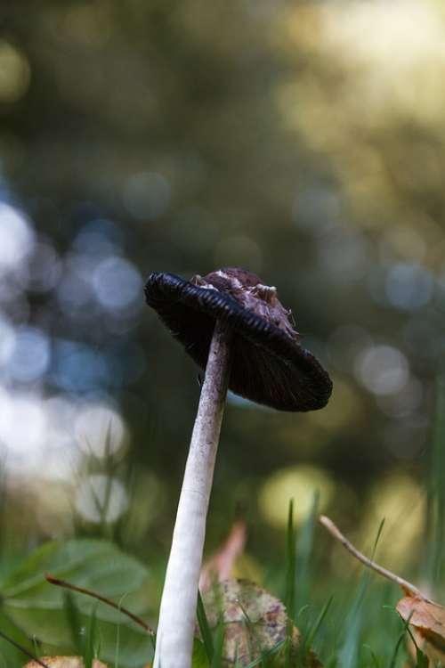 Mushroom Meadow Autumn