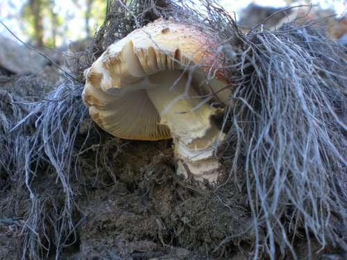 Mushroom Fad Autumn