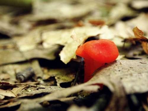 Mushroom Orange Little Tiny Growth Fungus Woods